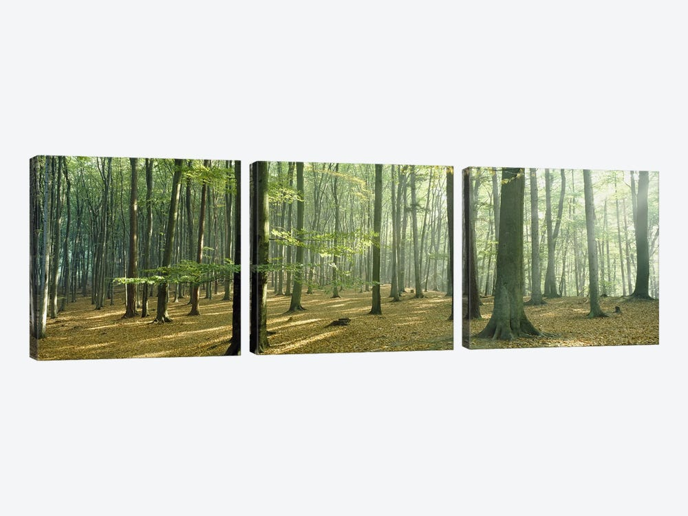 Woodlands near Annweiler Germany by Panoramic Images 3-piece Art Print