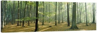 Woodlands near Annweiler Germany Canvas Art Print