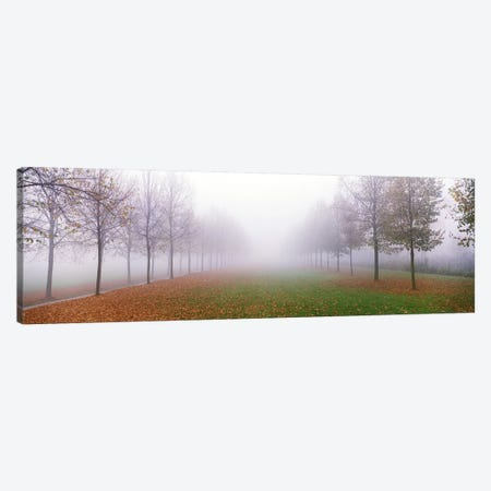 Trees in Fog Schleissheim Germany Canvas Print #PIM3896} by Panoramic Images Canvas Artwork
