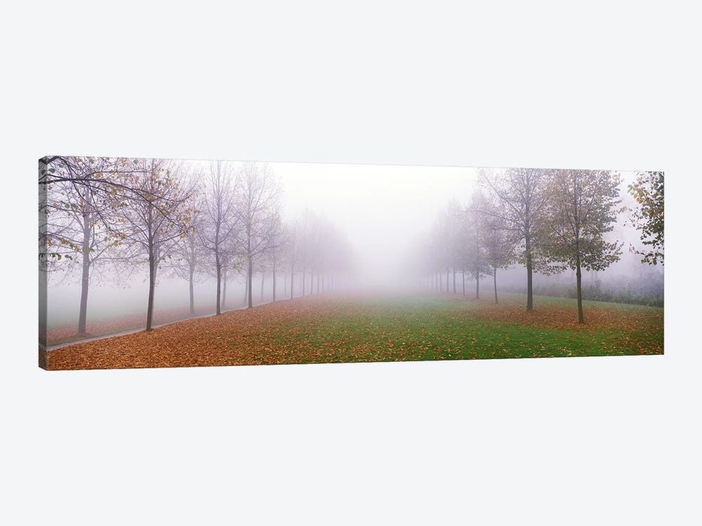 Trees in Fog Schleissheim Germany 1-piece Canvas Art