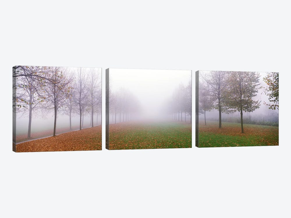 Trees in Fog Schleissheim Germany by Panoramic Images 3-piece Canvas Artwork