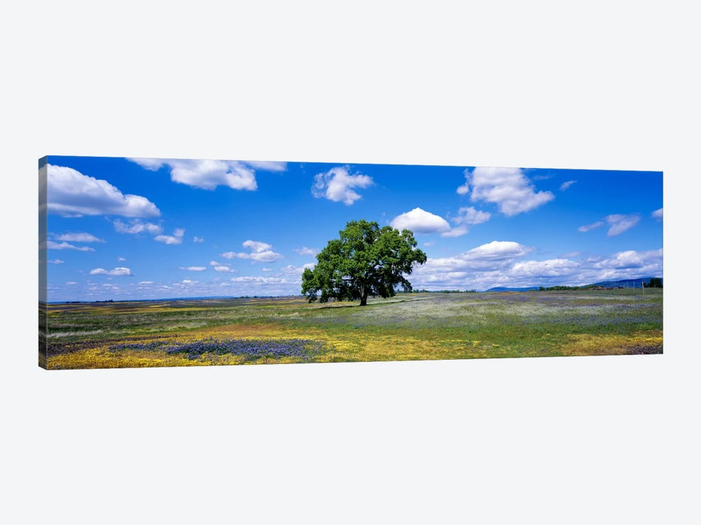 Lone Oak In A Field Of Wildflowers, Table Mountain Plateaus, California, USA by Panoramic Images 1-piece Art Print