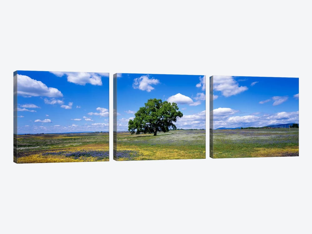 Lone Oak In A Field Of Wildflowers, Table Mountain Plateaus, California, USA by Panoramic Images 3-piece Art Print