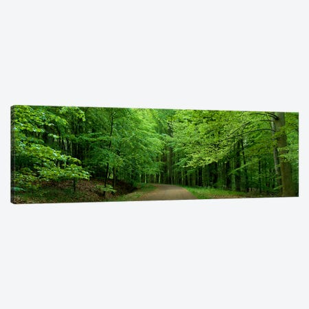 Road Through a Forest near Kassel Germany Canvas Print #PIM3919} by Panoramic Images Canvas Wall Art
