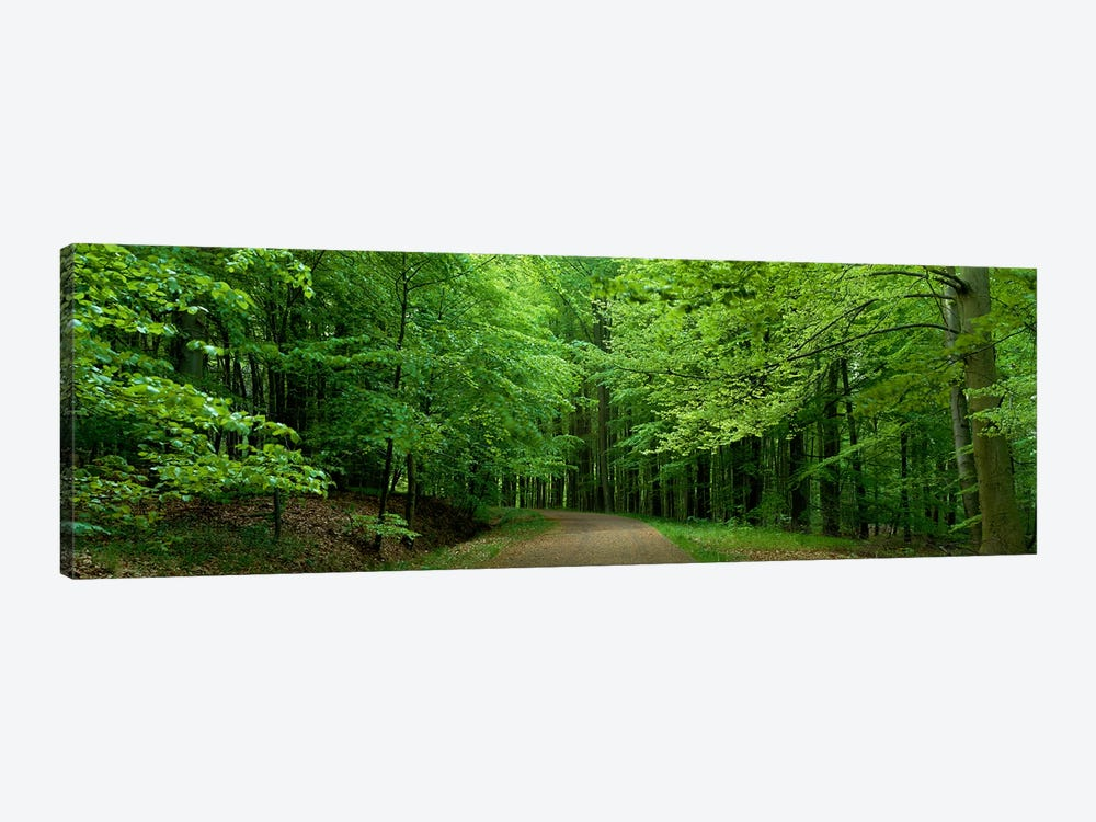 Road Through a Forest near Kassel Germany by Panoramic Images 1-piece Canvas Artwork