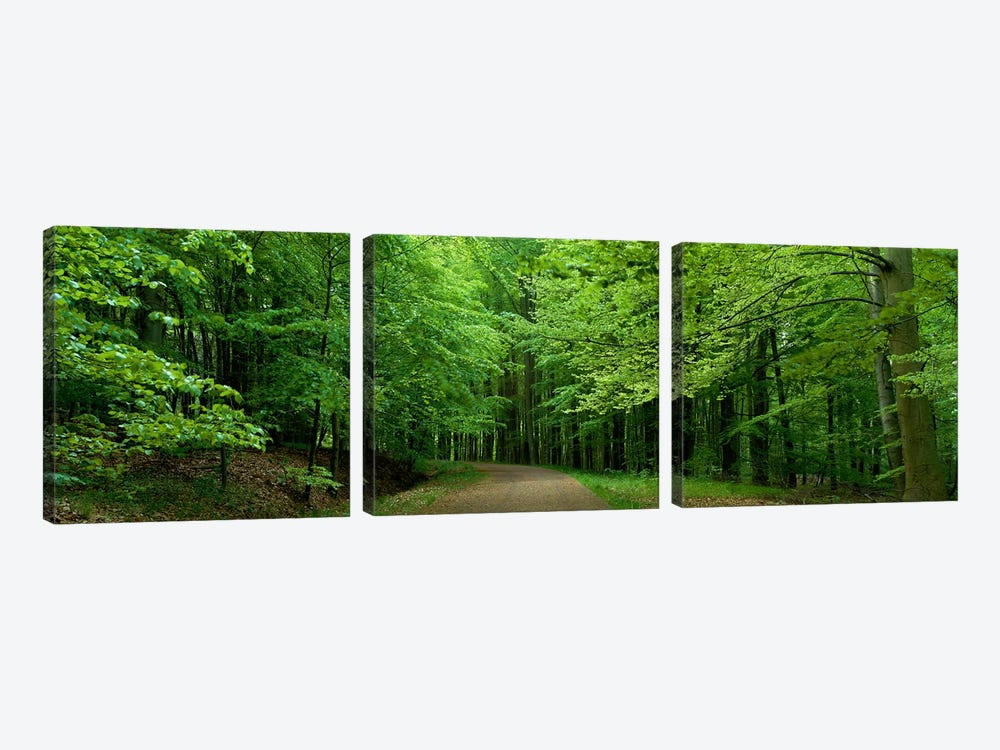 Road Through a Forest near Kassel Germany by Panoramic Images 3-piece Canvas Wall Art