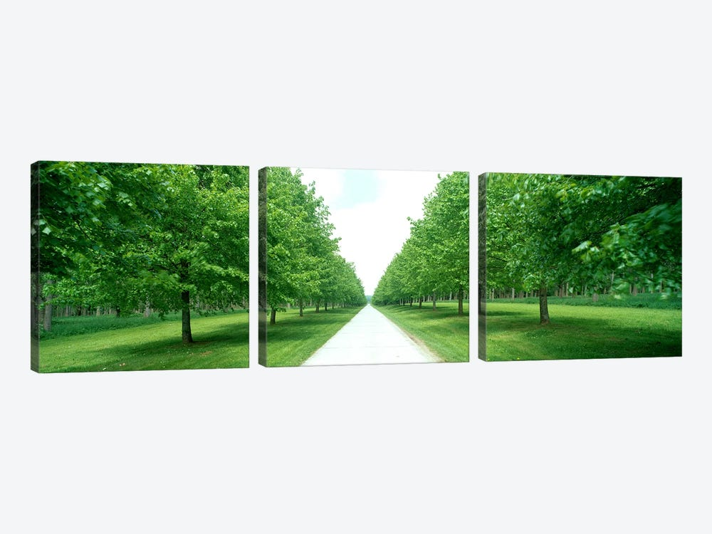 Avenue at Chateau de Modave Ardennes Belgium by Panoramic Images 3-piece Canvas Wall Art
