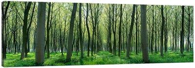 Forest Trail Chateau-Thierry France Canvas Print #PIM3936