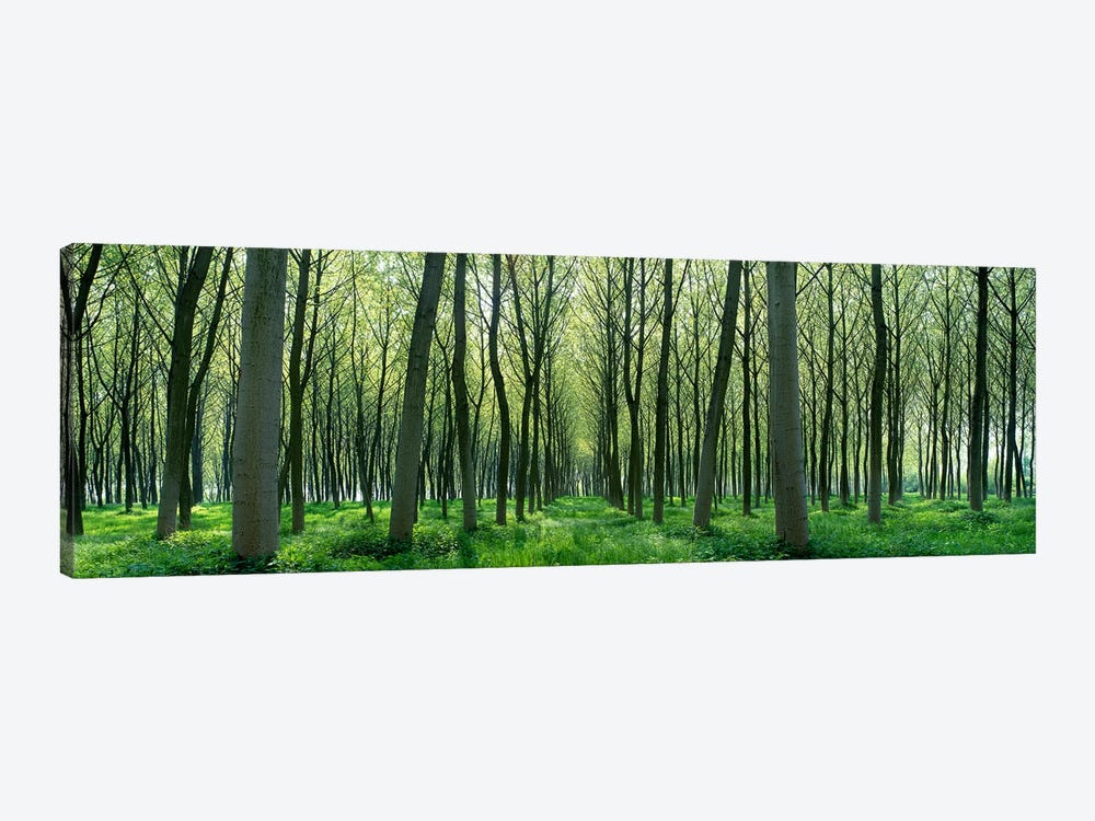 Forest Trail Chateau-Thierry France by Panoramic Images 1-piece Canvas Print