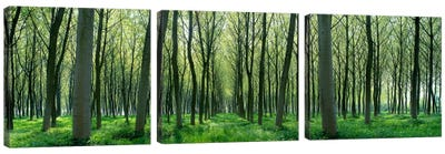 Forest Trail Chateau-Thierry France Canvas Art Print