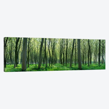 Forest Trail Chateau-Thierry France 3-Piece Canvas #PIM3936} by Panoramic Images Canvas Art Print