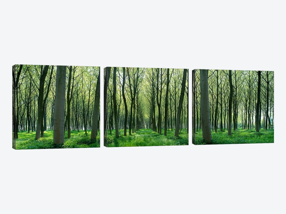 Forest Trail Chateau-Thierry France by Panoramic Images 3-piece Canvas Art Print