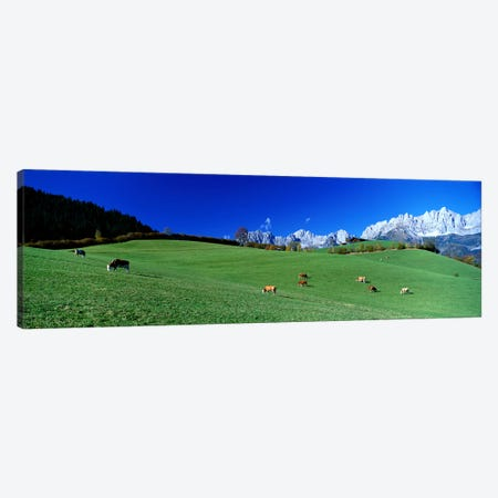 Cattle Graze in Alps Wilder Kaiser Going Austria Canvas Print #PIM3956} by Panoramic Images Canvas Art Print