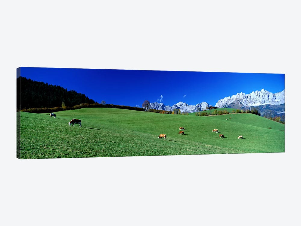 Cattle Graze in Alps Wilder Kaiser Going Austria by Panoramic Images 1-piece Canvas Print