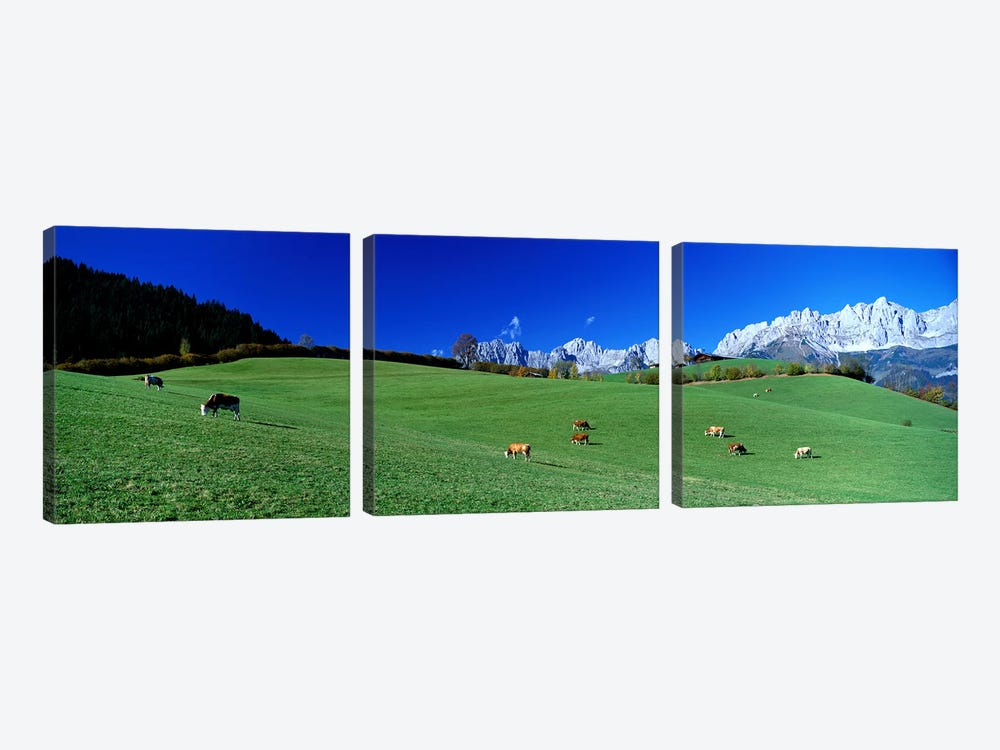 Cattle Graze in Alps Wilder Kaiser Going Austria by Panoramic Images 3-piece Canvas Art Print