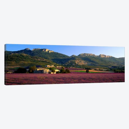 Countryside Lavender Fields, Drome, Auvergne-Rhone-Alpes, France Canvas Print #PIM3957} by Panoramic Images Art Print