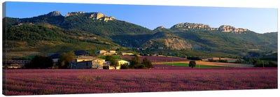 Countryside Lavender Fields, Drome, Auvergne-Rhone-Alpes, France Canvas Print #PIM3957