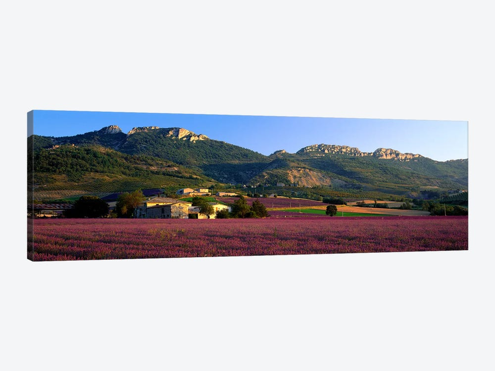 Countryside Lavender Fields, Drome, Auvergne-Rhone-Alpes, France by Panoramic Images 1-piece Canvas Art