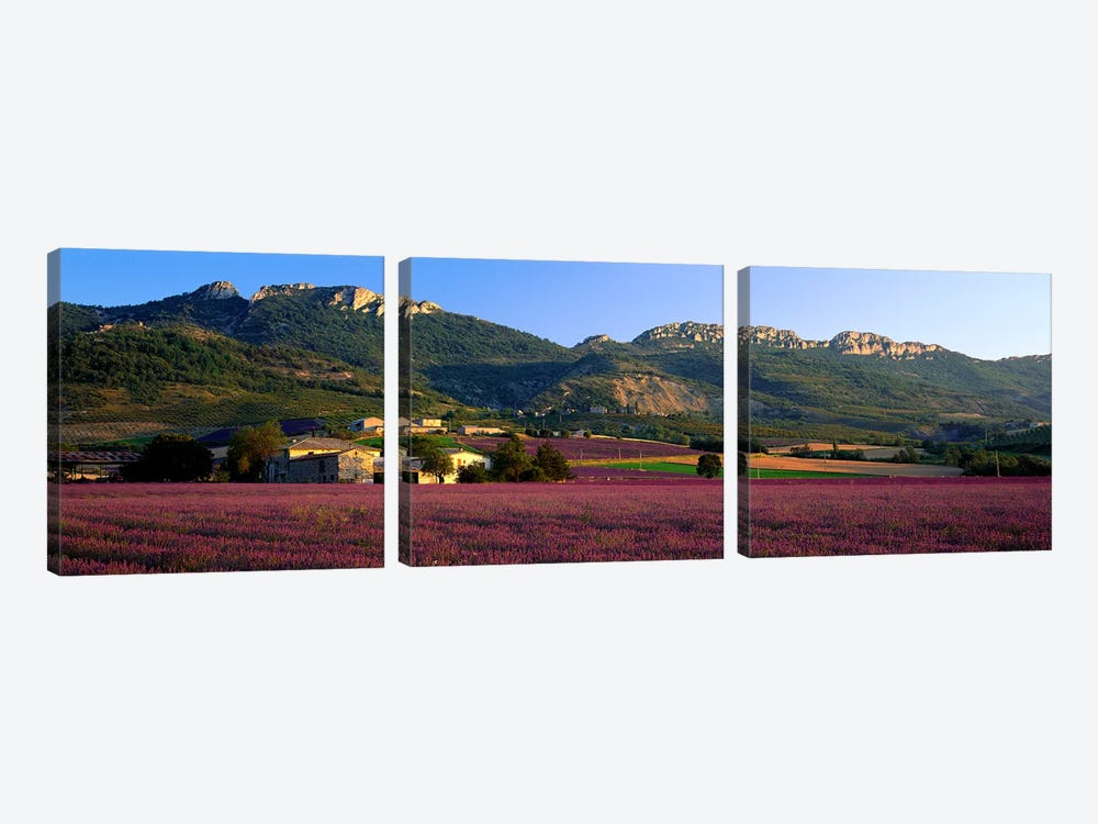 Countryside Lavender Fields, Drome, Auvergne-Rhone-Alpes, France by Panoramic Images 3-piece Canvas Artwork