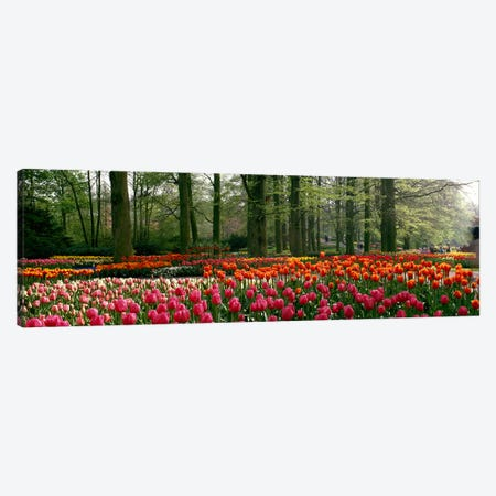 Keukenhof I, Lisse, South Holland, Kingdom Of The Netherlands Canvas Print #PIM3974} by Panoramic Images Canvas Print