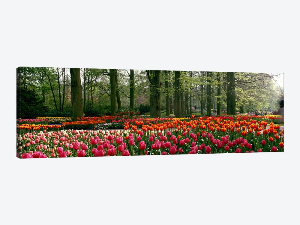 Keukenhof I, Lisse, South Holland, Kingdom Of The Netherlands by Panoramic Images 1-piece Canvas Art Print