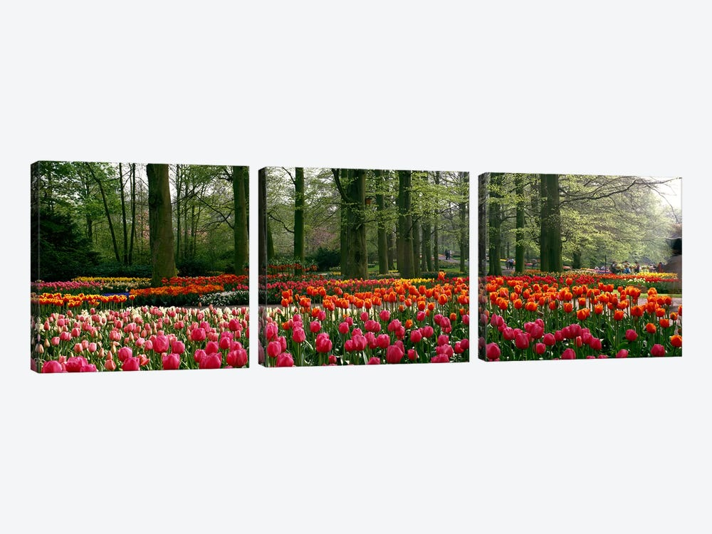 Keukenhof I, Lisse, South Holland, Kingdom Of The Netherlands by Panoramic Images 3-piece Canvas Art Print