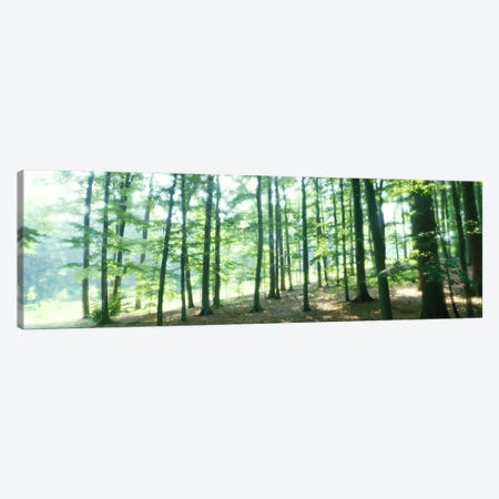 Forest Scene with FogOdenwald, near Heidelberg, Germany Canvas Print #PIM4005} by Panoramic Images Canvas Artwork