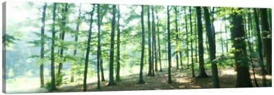 Forest Scene with FogOdenwald, near Heidelberg, Germany Canvas Print #PIM4005