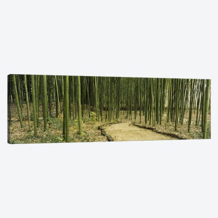 Bamboo Forest, Kyoto, Japan Canvas Print #PIM4032} by Panoramic Images Canvas Wall Art