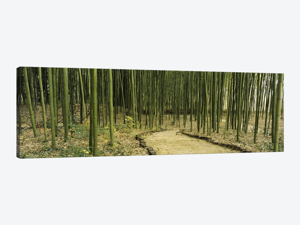 Bamboo Forest, Kyoto, Japan by Panoramic Images 1-piece Canvas Print