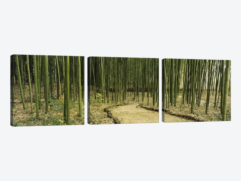 Bamboo Forest, Kyoto, Japan by Panoramic Images 3-piece Canvas Art Print