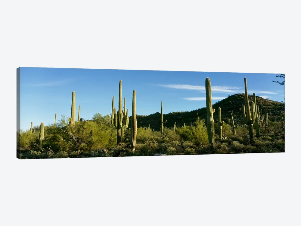 Cactus by Panoramic Images 1-piece Canvas Wall Art