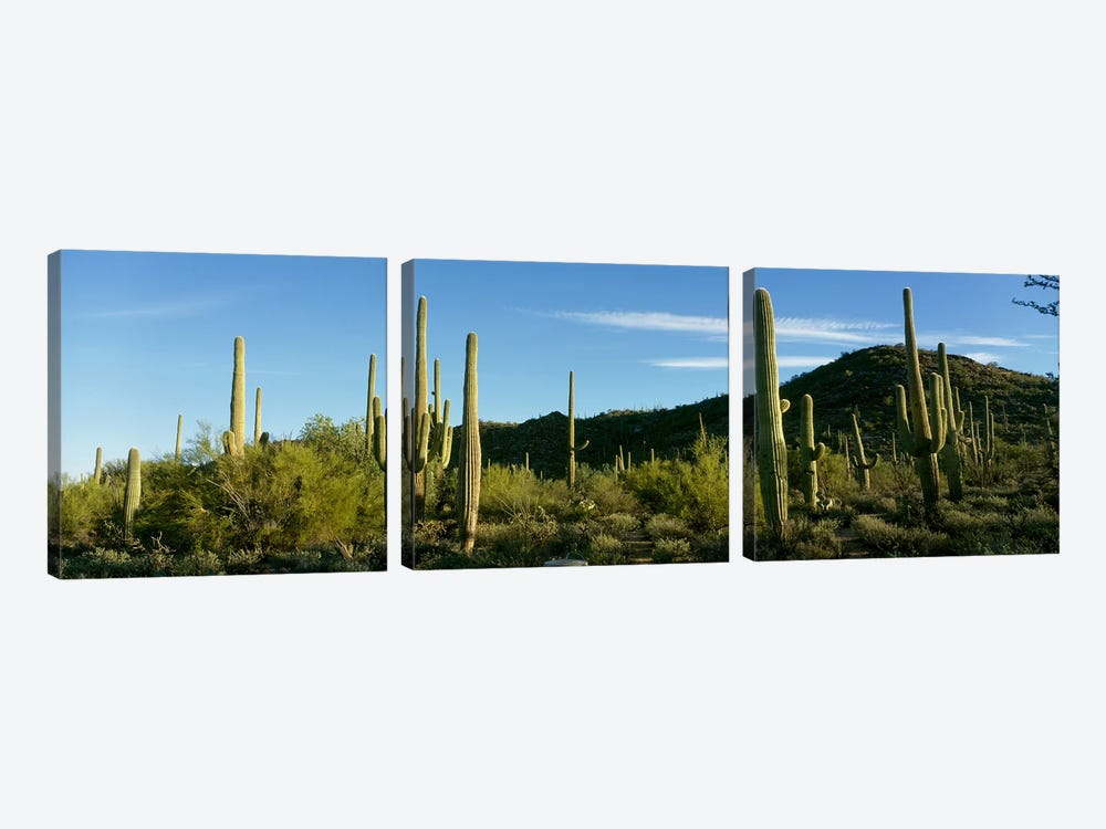 Cactus by Panoramic Images 3-piece Canvas Artwork