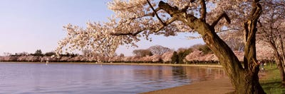 Giant Pink Cherry Blossom Tree Park 3 PCS Canvas Printed Wall Poster Home Decor