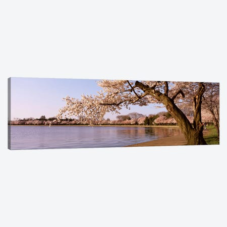 Cherry blossom tree along a lake, Potomac Park, Washington DC, USA Canvas Print #PIM4072} by Panoramic Images Canvas Art