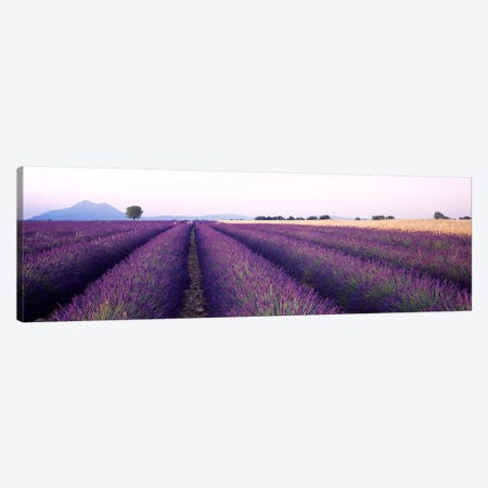 Lavender Field, Valensole, Provence-Alpes-Cote d'Azur, France Canvas Print #PIM4085} by Panoramic Images Canvas Art
