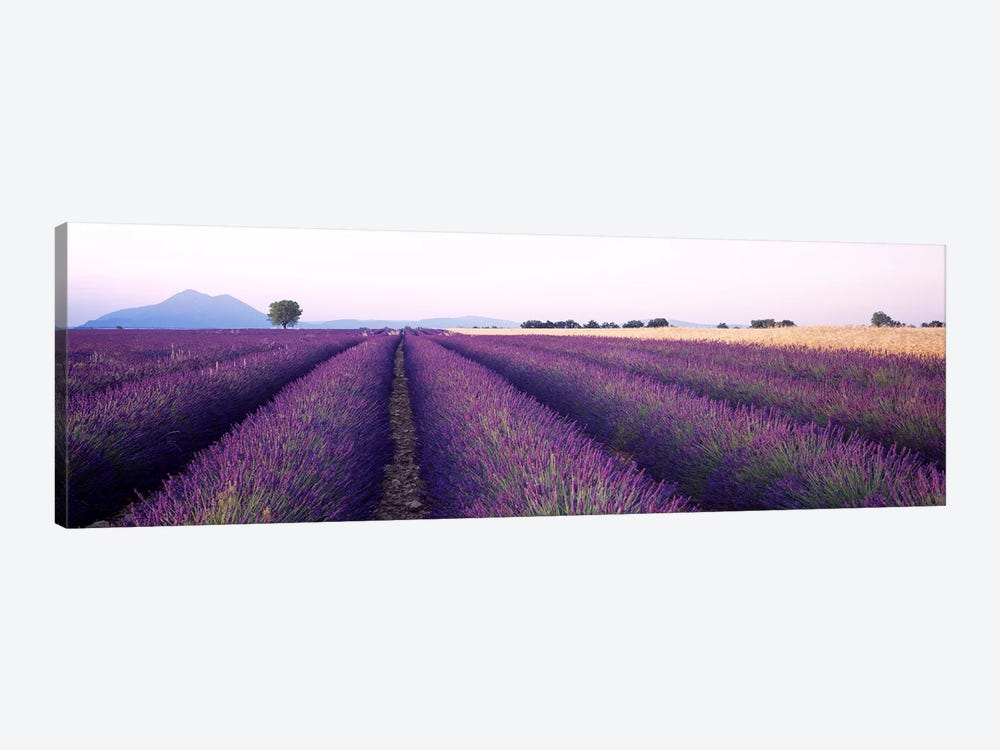 Lavender Field, Valensole, Provence-Alpes-Cote d'Azur, France by Panoramic Images 1-piece Canvas Print