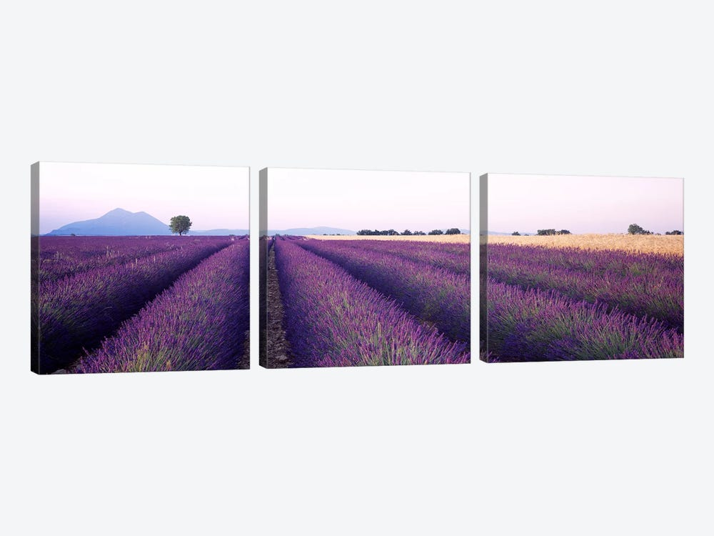 Lavender Field, Valensole, Provence-Alpes-Cote d'Azur, France by Panoramic Images 3-piece Canvas Art Print