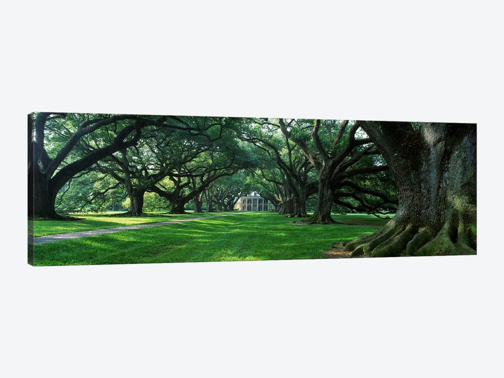 USA, Louisiana, New Orleans, Oak Alley Plantation, plantation home through alley of oak trees 1-piece Canvas Art Print