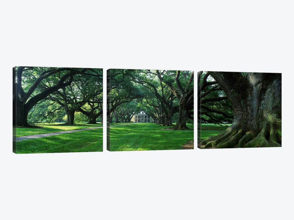 USA, Louisiana, New Orleans, Oak Alley Plantation, plantation home through alley of oak trees by Panoramic Images 3-piece Canvas Print