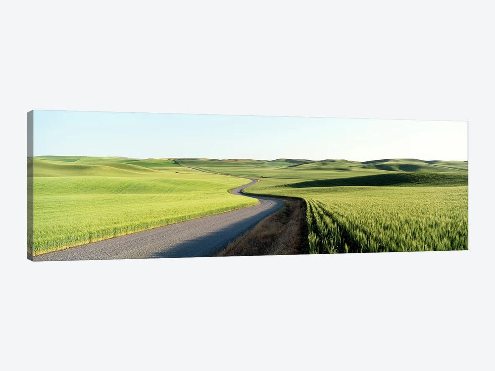Gravel Road Through Barley and Wheat Fields WA by Panoramic Images 1-piece Canvas Print