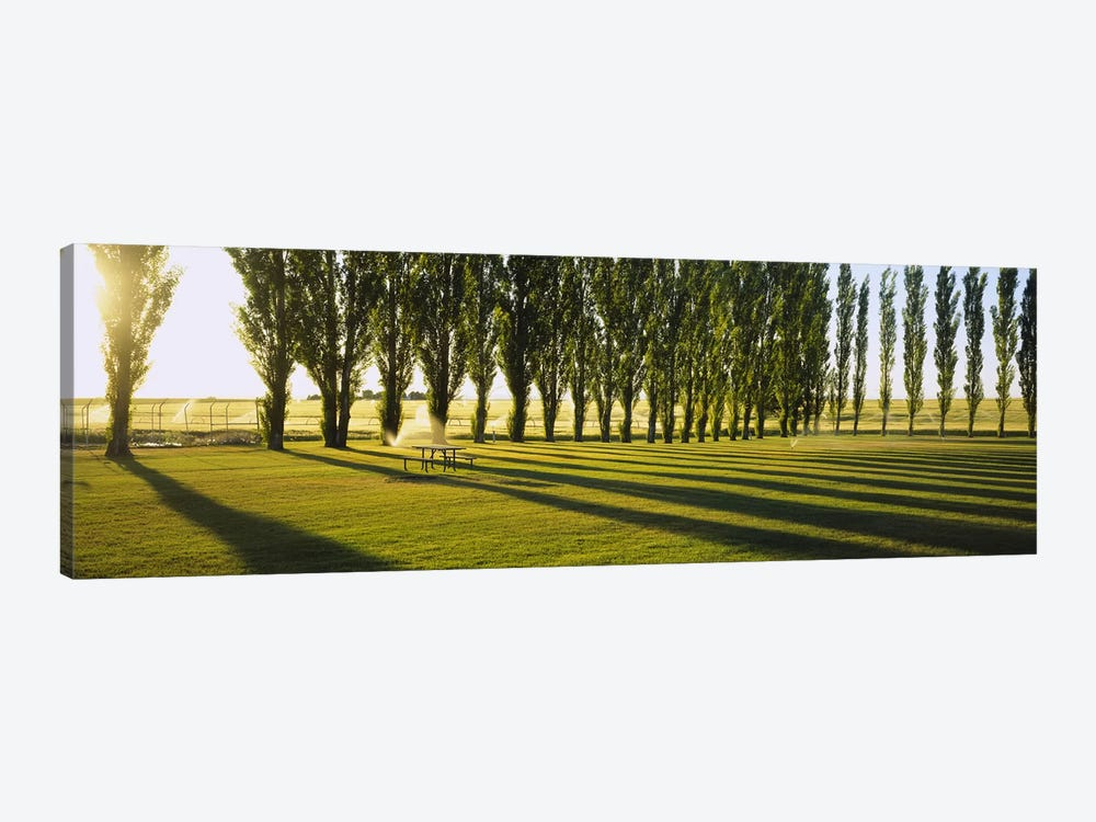 A Row Of Poplar Trees, Twin Falls, Idaho, USA Canvas Wall Art | iCanvas