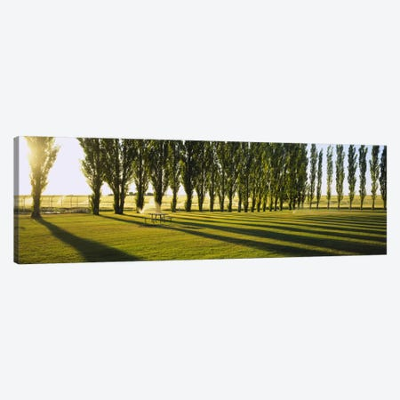 A Row Of Poplar Trees, Twin Falls, Idaho, USA Canvas Print #PIM4153} by Panoramic Images Canvas Print