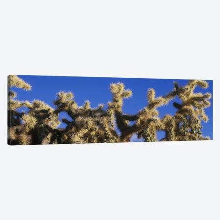 Chainfruit Cholla Cactus Saguaro National Park AZ 3-Piece Canvas #PIM4156} by Panoramic Images Canvas Art