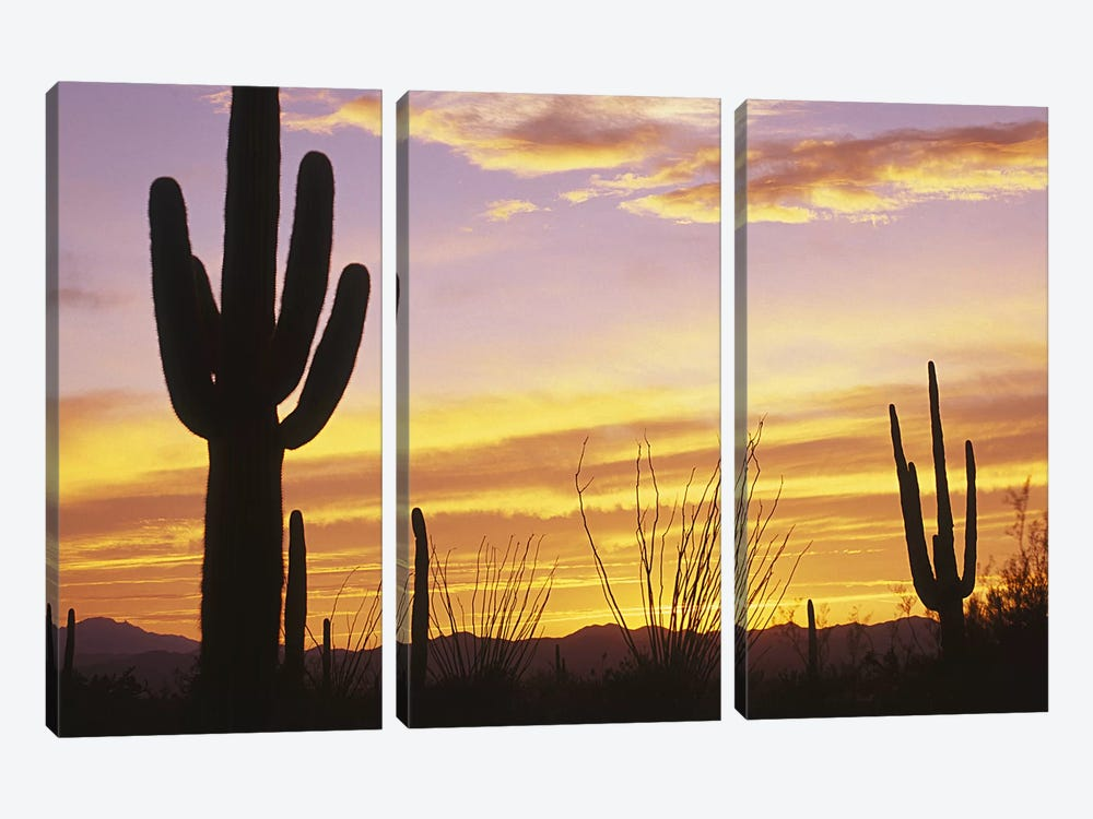 Sunset Saguaro Cactus Saguaro National Park AZ 3-piece Art Print
