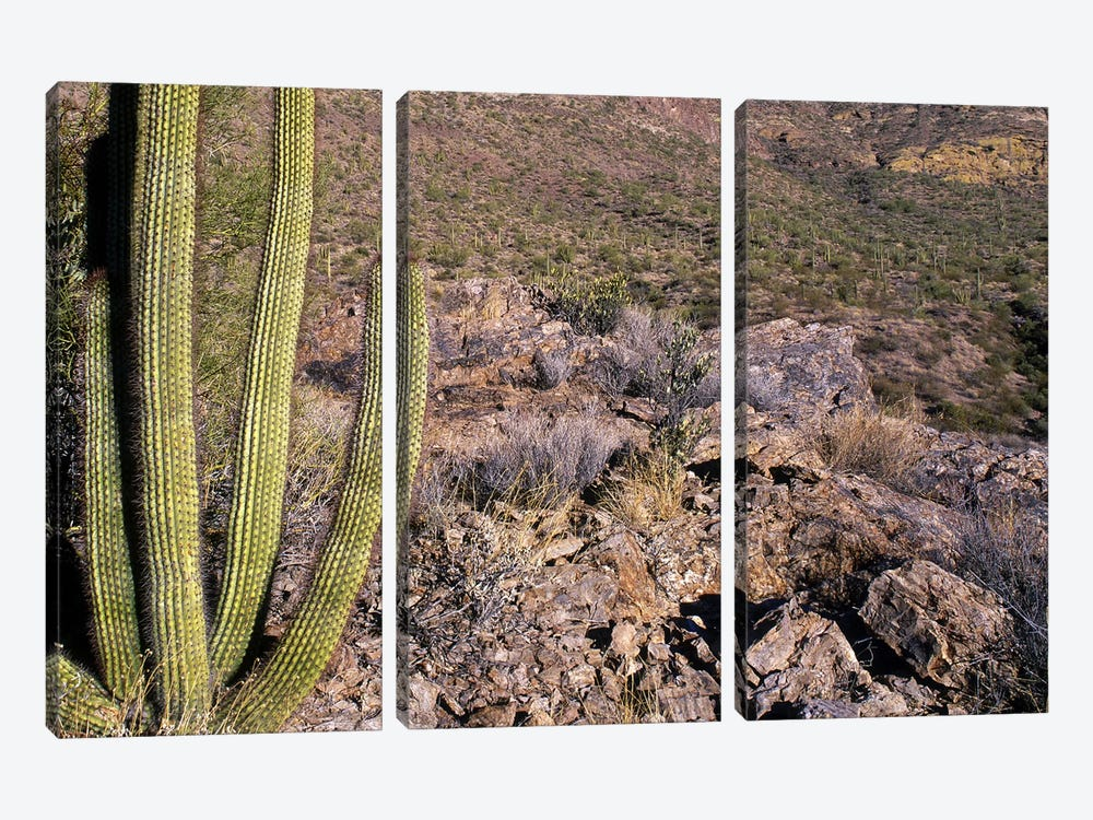 Organ Pipe Cactus AZ by Panoramic Images 3-piece Canvas Art Print