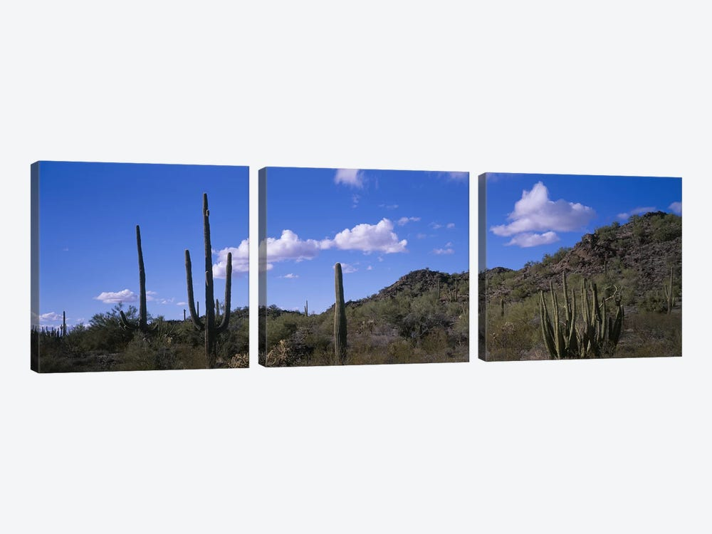 Desert Road AZ by Panoramic Images 3-piece Canvas Art Print