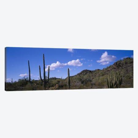Desert Road AZ Canvas Print #PIM4162} by Panoramic Images Canvas Artwork