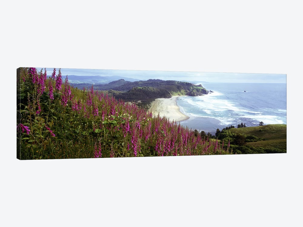 Coastal Landscape With Foxgloves In The Foreground As Seen From Cascade Head , Tillamook County, Oregon, USA by Panoramic Images 1-piece Art Print