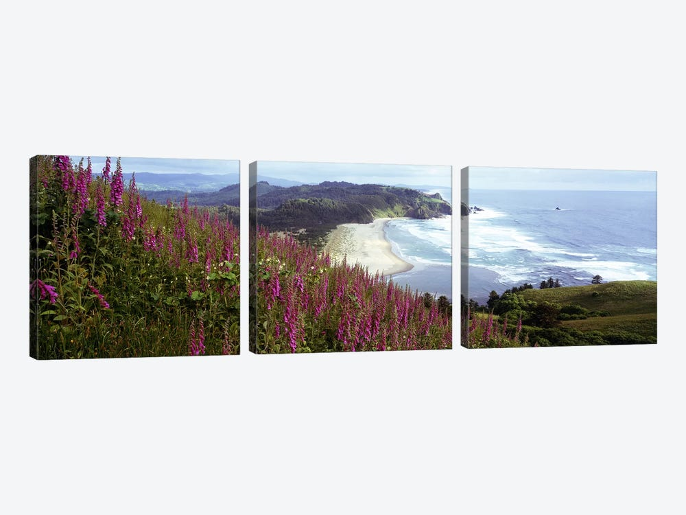 Coastal Landscape With Foxgloves In The Foreground As Seen From Cascade Head , Tillamook County, Oregon, USA 3-piece Art Print